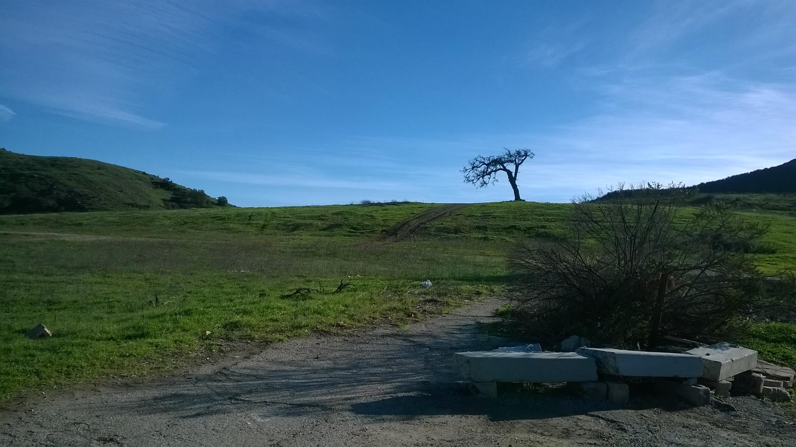phantasm-filming-locations-hanging-tree-agoura-hills